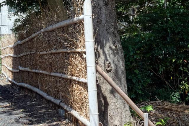 【境界トラブル】塀や樹木の越境はどう対処すべきなの!?