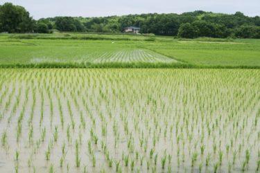 地目が「田」だと売買は難しい?売却するための2つの方法
