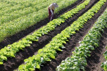地目が畑の土地を売買するにはどのような手続きが必要なのか