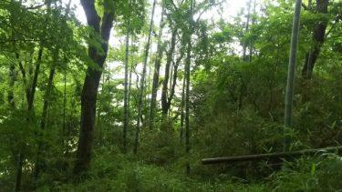 意外な盲点!地目が「山林」の土地を売買する際の注意点!